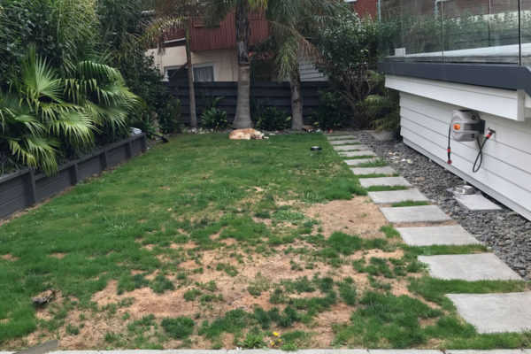 Mairangi Bay - Residential Turf Before